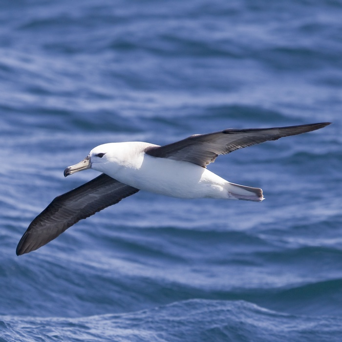 Avis rencontre otaries marineland